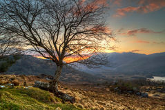 Lonely tree at sunset in mountains Royalty Free Stock Image