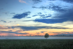 Lonely tree at sunset, Russia royalty free stock photo