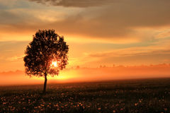 Lonely tree on sunset, Russia Royalty Free Stock Photo