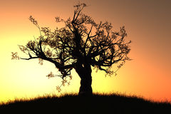 Lonely tree in the sunset / sunrise 3D render. Meadow field Royalty Free Stock Photos
