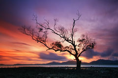 Lonely tree by the  sunset, Thailand Stock Image