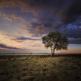 Lonely tree when sunset time with reflection and burn sky II Royalty Free Stock Photo