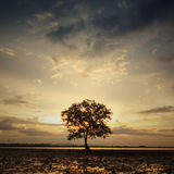 Lonely tree when sunset time with reflection and burn sky III Royalty Free Stock Photo