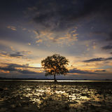 Lonely tree when sunset time with reflection and burn sky Stock Photo