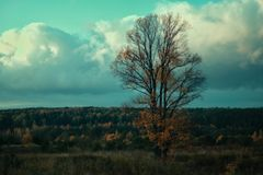 Tree. Lonely tree at the Sunset Stock Photo
