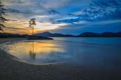 Lonely Tree. SUnset view from Pulau Pangkor, Malaysia stock image