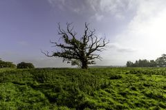 Lonely tree - Surrey, United Kingdom. Lonely tree in Uckfield, Surrey, United Kingdom royalty free stock image