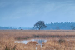 Lonely tree on swamp during misty morning Stock Photos