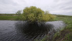Lonely tree in a swamp in the wind in cloudy weather stock video footage