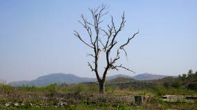 Lonely tree on Taxila ruins. Pakistan Royalty Free Stock Photos