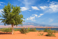 Lonely tree on th sandy beach in Sand Hollow State Park in Utah stock photo