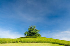 Lonely tree on the top of a hill Stock Images