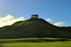 Lonely tree on the top of the hill. Old robust tree standing alone on the top of green hill in New Zealand Royalty Free Stock Photography
