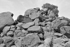 Lonely tree on the top of rocks -B&W- Royalty Free Stock Photography