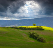 Lonely tree in the Toscana before the storm Stock Photography