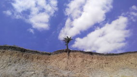 Lonely tree trying to survive. A solitary tree, clinging to the precipice Royalty Free Stock Photo