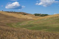Lonely tree, Tuscan. Lonely tree on grain field. Chianti, Tuscany Stock Photos