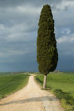 Lonely tree in Tuscan landscape Stock Photos