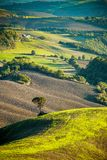 Lonely tree in a Tuscan valey. At sunset royalty free stock photos