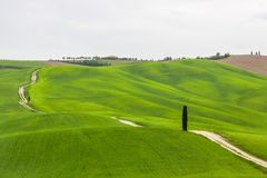 Lonely tree in Tuscany in Val di Orcia near Pienza Royalty Free Stock Photos