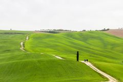 Lonely tree in Tuscany in Val di Orcia near Pienza Stock Photo