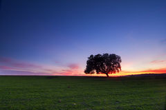 Lonely tree at twilight Stock Photos