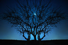 Lonely tree under blue night sky Royalty Free Stock Photos