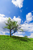 Lonely tree under cloudy blue sky. Lonely tree with green leaves growing on green hill under cloudy blue sky Stock Image