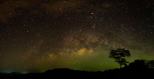 Lonely tree under milky way at night. Lonely tree under shining milky way at night royalty free stock photo
