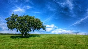 The lonely tree under the sky. Beautiful weather, sky Royalty Free Stock Photo