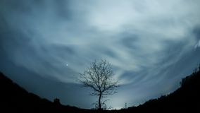 Lonely tree under starry sky. Starry night with a shadow of a tree in foreground. Fisheye Horizon stock video footage