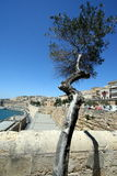 Lonely tree in the Valletta harbour Stock Image