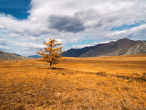 A lonely tree in the valley. Among the mountains in autumn Royalty Free Stock Photo