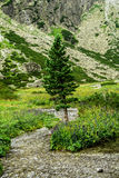 Lonely tree. In the valley. Poland, Europe Stock Images