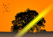 Lonely tree vector. This image is a savannah tree vector illustration.The yellow belt available your text place Royalty Free Stock Image