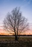 Lonely tree in a view of colorful sunset royalty free stock photography