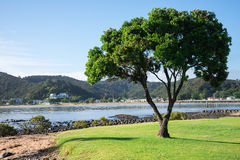 A lonely tree and a view of Paihia from Waitangi beach. New Zealand, North Island stock photos