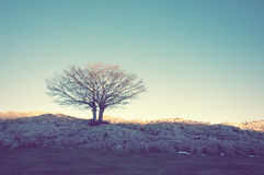 Lonely tree with vintage effect Stock Images