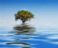 Lonely tree on water Stock Photo