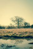 Lonely tree by the water Royalty Free Stock Photography