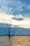 Lonely tree in water at sunset Stock Photography