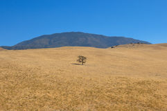 Lonely tree on the way to Death Valley National Park, California Stock Photos