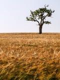Lonely tree. Stock Photos