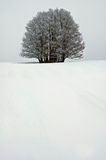 Lonely Tree in White. Royalty Free Stock Images