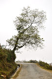 Lonely tree. On white background with country road Royalty Free Stock Photos