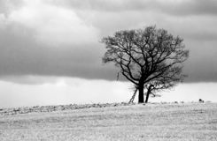 Lonely tree in white and black stock photos
