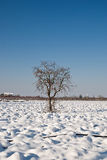 Lonely tree in white countryside Royalty Free Stock Photo