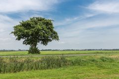 Lonely tree in wide Dutch landscape Royalty Free Stock Photography