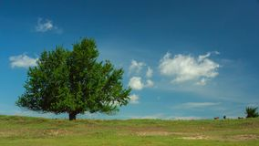 Lonely tree with wild horses and moving clouds on blue sky Royalty Free Stock Image