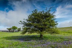 lonely tree on wild meadow Stock Photo